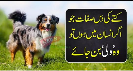 کتے کی دس صفات جو اگرا نسا ن میں ہوں تو وہ 'ولی 'بن جائے